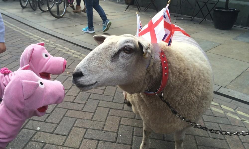 Dort treffen die Schweine Amy, the sheep, die dort Gras kaufen will.