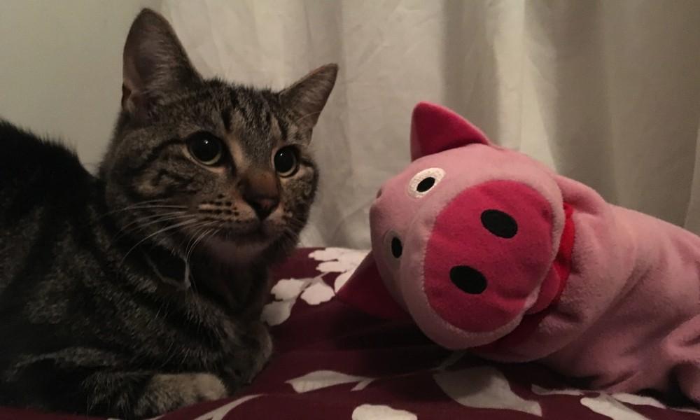 Bei den Gastgebern verbringen die Schweine einen lustigen Abend.