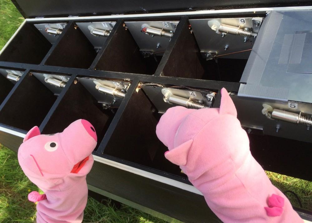 Die Schweine schlagen vor, Kartoffeln einzufüllen.