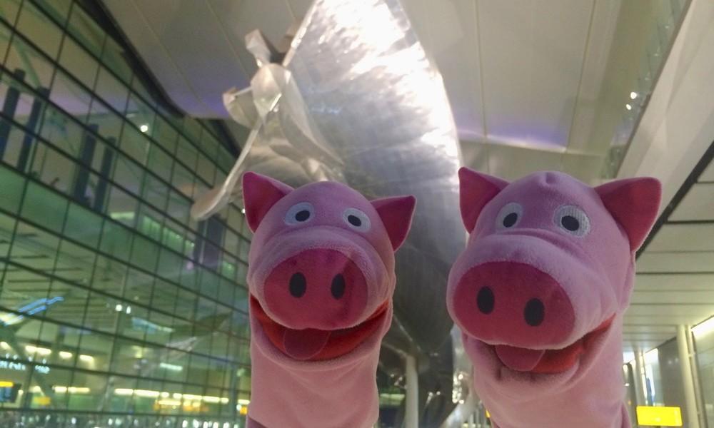 Endlich wieder unterwegs: Die Schweine landen in Heathrow.