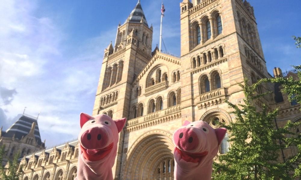 Später gehen die Schweine ins Naturkundemuseum.