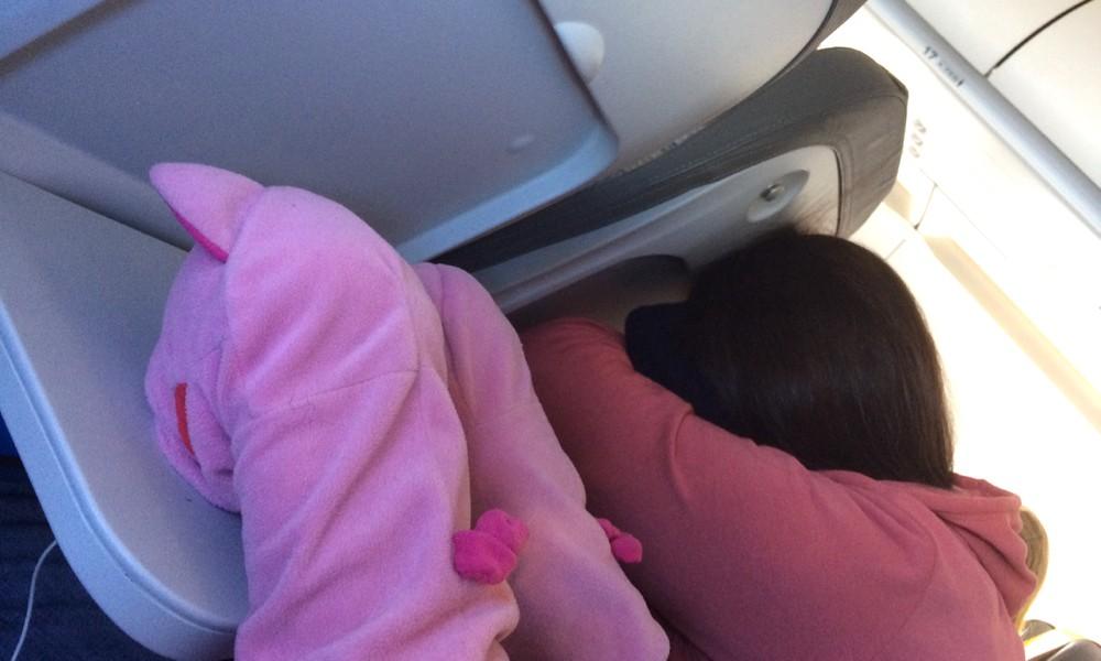 Die Schweine machen andere Flugreisende nach.