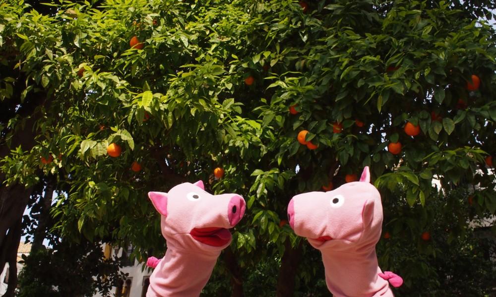 In Sevilla hängen Orangen an den Bäumen. Die Schweine hatten eher mit Patatas gerechnet.